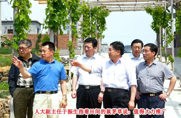 潍坊、寿光客人来示范园参观