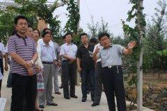 正宁县县委书记吴丽华一行参观有机苹果示范园