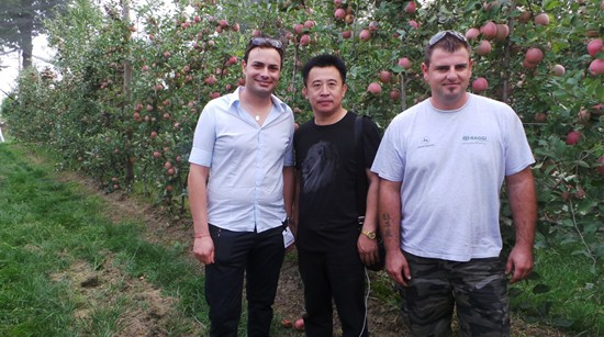 kok软件达打造优质苗木繁育基地 促进我市苹果更新