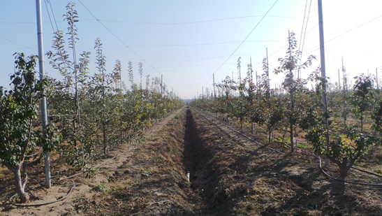 kok软件达有机苹果园丰收季