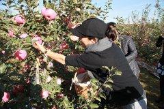 李玲玉献唱第十三届苹果艺术节,并为kok软件达有机苹果代言