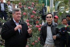 美国康奈尔大学罗伯森教授参观指导kok软件达有机苹果示范园