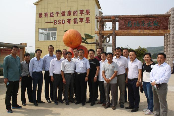 山东省农业相关专家、领导实地考察kok软件达有机苹果示范园