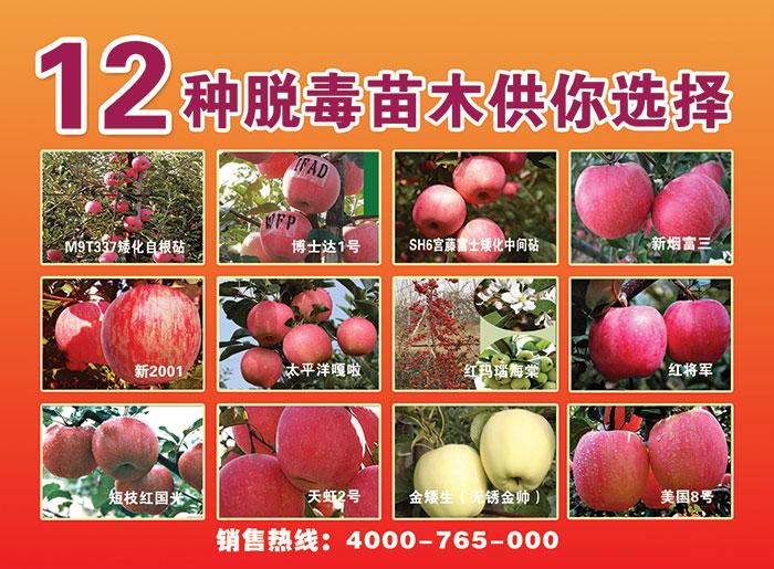kok软件达集团参加2015北方(烟台)果树苗木·生产资料