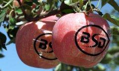 苹果苗木对园地有什么要求