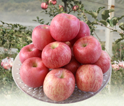 烟台苹果苗木的选购方式
