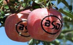 苹果苗木种下去多长时间可以结果