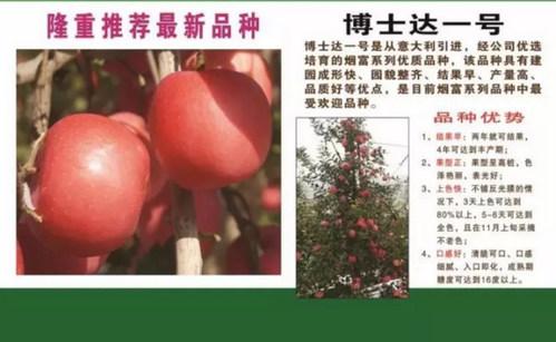 想要种好苹果苗木是关键