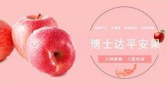 你们看这个又大又红的苹果