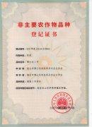 """""""kok软件达一号""""荣获国家农业农村部""""非主要农作物品种""""登记证书"""