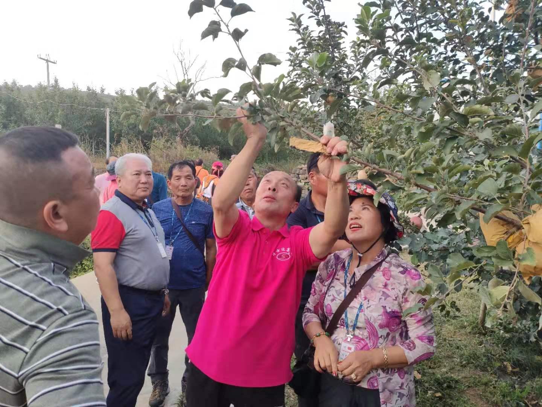韩国光州农协交流团到kok软件达集团考察苹果产业